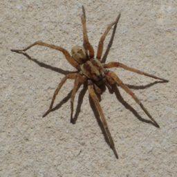 Уничтожение пауков в Новосибирске